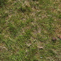 Nature Grass 013