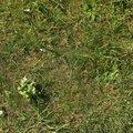 Nature Grass 014