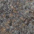 Nature Lichen 022