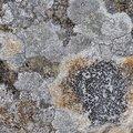 Nature Lichen 023