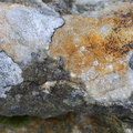 Nature Lichen 024