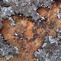 Nature Lichen 025