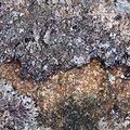 Nature Lichen 027