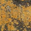 Nature Lichen 030