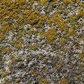 Nature Lichen 033