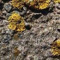 Nature Lichen 034