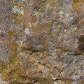 Nature Lichen 035