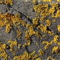 Nature Lichen 038