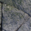Nature Lichen 043