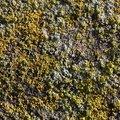 Nature Lichen 044