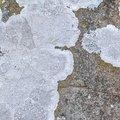 Nature Lichen 047