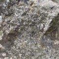 Rock Stone 089