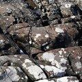 Rock Stone 066