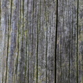 Wood Planks Old 026