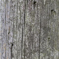 Wood Planks Old 029