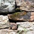 Wall Stone 030
