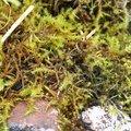 Nature Moss 012