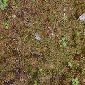 Nature Moss 009