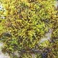 Nature Moss 010