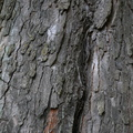 Nature Tree Trunk 019