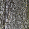 Nature Tree Trunk 020
