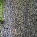 Nature Tree Trunk 023