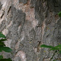 Nature Tree Trunk 024
