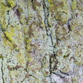 Nature Tree Trunk 025