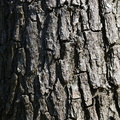 Nature Tree Trunk 026