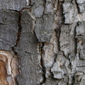 Nature Tree Trunk 027