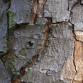 Nature Tree Trunk 028