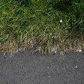 Road Edge 001
