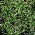 Nature Bushes 003