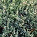 Nature Bushes 004