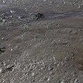 Sea Mud 011