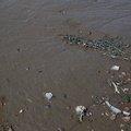 Sea Mud 001