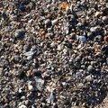 Sea Seashell 003