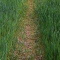 Agro Field 005
