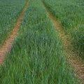 Agro Field 006