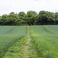 Agro Field 007