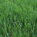 Agro Field 010