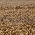 Agro Field 011