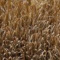 Agro Field 014