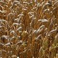 Agro Field 015