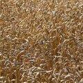 Agro Field 016
