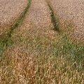 Agro Field 017