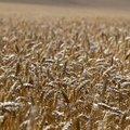 Agro Field 020