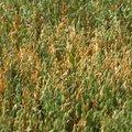 Agro Field 023