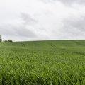 Agro Field 001
