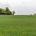 Agro Field 002